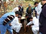 KARINCA YUVASI - Eskişehir'de 25 Karınca Yuvası Nakledilecek
