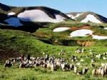 Erzincan'da Meralar Sürü Sahiplerine Kiralandı