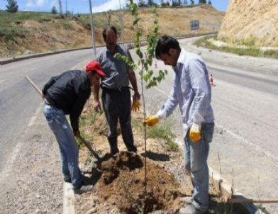 Ağaçlandırma faaliyetleri kredi yurtlar kurumu na kadar uzandı