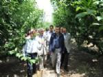 İSMAIL SOYLU - Lekesiz'den 'Tarım' Vurgusu