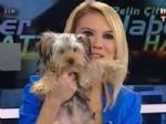PELIN ÇIFT - Pelin Çift canlı yayına köpek yavrusuyla çıktı