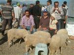 HAYVAN BAKICISI - Havran'da Kurbanlıklara İlgi Yok