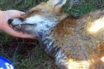 İHSAN AYRANCI - Enez'de Sokak Hayvanları Telef Oldu