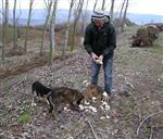 Ormanlık Alanda Donmak Üzere Olan 10 Köpek Bulundu