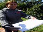 SÜREYYA AYHAN - Süreyya Ayhan, Alptekin'e Danışmanlık Davası Açtı