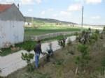 ARIF TEKE - Mezarlıklarda Bahar Bakımı