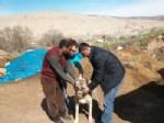 Erzincan'da Delibaş Hastalığı İle Mücadele