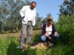 KAYTAZDERE - Yalova'da 60 Köpek Zehirlenerek Öldürüldü