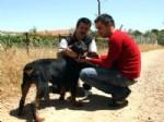 DOBERMAN - Şiddet Gören Köpek Sahibine Teslim Edildi