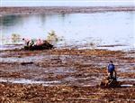 ULUDERBENT - Köylülerin Ölümüne Odun Toplama Yarışı