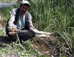 Kemaliye'de Balık Ölümleri Araştırılıyor