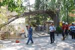DERYA ÖZDEMIR - Asırlık Çınarın Dalı Kızılay Çadırının Üzerine Devrildi