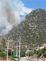 Yalova'da Orman Yangını