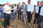 Kastamonu'da Patates Tarla Günü Düzenlendi