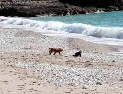 Denize giden bebeği köpek kurtardı