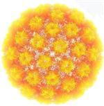 PREZERVATIF - Her 4 Kişiden 3'ünde Hpv Virüsü Görülüyor