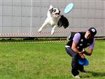 PET SHOP - Pet İstanbul Fuarı 2014, Açılış Şovlarıyla Büyüledi