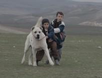 Sivas filmindeki köpeğin sahibi ilk kez konuştu
