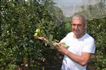 Organik Tarım Fatsa'da Benimseniyor