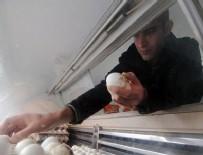 5 dil bilen öğretmen yumurta satıyor