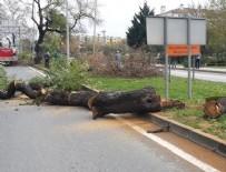 Yalova Belediyesi'nden 'Ağaç' açıklaması