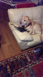 LABRADOR - Hukukta Bir İlk Yaşandı, Köpeğin İtiraz Dilekçesi Kabul Edildi