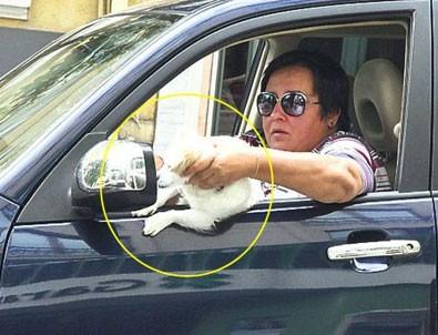 akrep nalan dan köpeğine direksiyon dersi