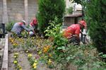 ERİK AĞACI - Ürgüp Belediyesi Tarafından 10 Bin Adet Çiçek Dikildi
