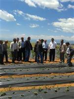 HÜYÜKLÜ - Beyşehirli Çiftçilere Çilek Üretimi Tavsiyesi