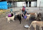 FARUK GÜNGÖR - Aydın'da Sokak ve Doğa Hayvanları İçin Üçlü İşbirliği