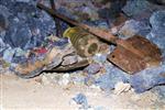 Balıkesir'deki Maden Kazası