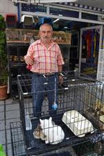PET SHOP - Evcil Hayvanları Serinleten Yöntem