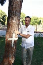 """MUZAFFER YÜKSEL - Kesilecek Ağaçlar İçin 'Evlat Edinme"""" Kampanyası"""