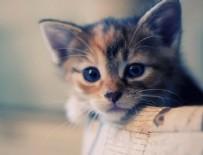 SEVİMLİ KEDİ - Ev alana kedi hediye