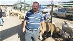 Burhaniye'de Kurbanlıkların Elde Kalacak Korkusu