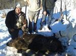 Avcılar 200 Kiloluk Domuz Avladı