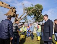 ANTALYA BELEDİYESİ - Antalya Belediyesi ağaçları kesmek yerine söktü