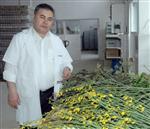 ŞIFALı BITKI - Ege Lokmanı'ndan Şeker Hastalığına Altı Ayda Bitkisel Çözüm