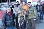 Yaralı Yavru Karacayı Köpeklerden Köylüler Kurtardı