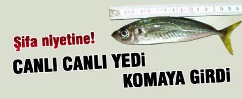 Canlı canlı balık yuttu hastanelik oldu