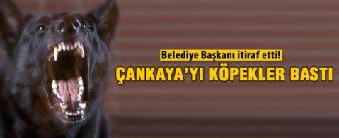 Alper Taşdelen'den 'köpek' itirafı