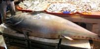 BALIKÇI ESNAFI - Balık Pazarının Dev Misafiri Görenleri Hayrete Düşürüyor