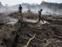 PALMİYE YAĞI - Endonezya'daki Orman Yangınları