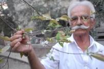 ERİK AĞACI - Erik Ağaçları Çiçek Açtı