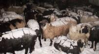 Çobanlar Ve Sürüleri Kurtarıldı