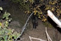 Karatay'a Yaban Domuzu İndi