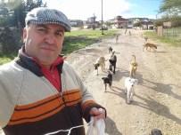 Yaylada Aç Kalan Köpekleri Besliyor