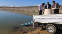 BARAJ GÖLETİ - Cip Barajına 100 Bin Yavru Sazan Bırakıldı
