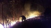 Orman Yangını Korkuttu !