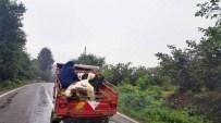 Patpatta İneklerle Tehlikeli Yolculuk